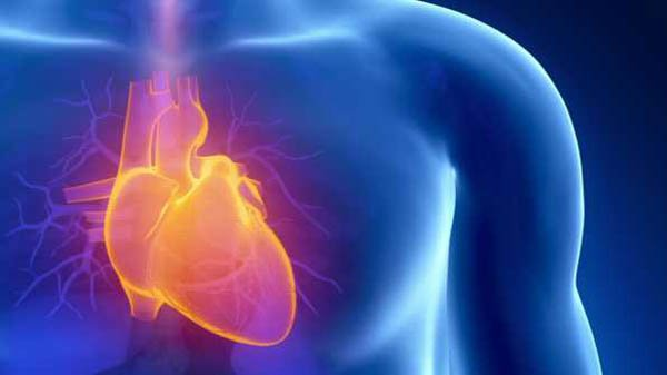 Clenbuterol Protects The Heart During Intense Workouts