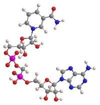 Clenbutrol Ingredient - Nicotinamide