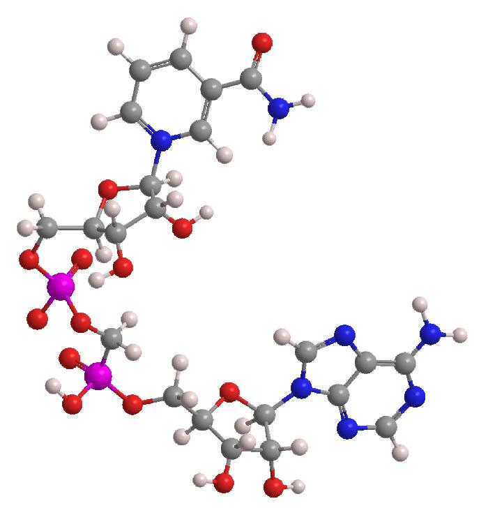 Clenbutrol-Ingredient-Nicotinamide